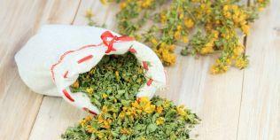 Tratamente naturiste cu sunatoare, planta care calmeaza nervii si vindeca bolile ficatului