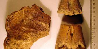 Cum aratau zeii oamenilor care populau teritoriul Romaniei in neolitic. Figurine de femei, fara sani si organe genitale