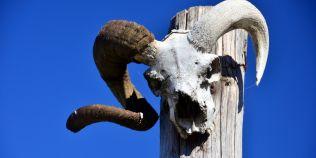 Obiceiul romanesc macabru: atarnarea cadavrelor de animale in garduri. Ce semnificatie au capetele de cai sau de berbeci