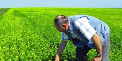 Cum este pus in pericol viitorul biodieselului din Romania. O schema frauduloasa pornita in Polonia ameninta fermierii si producatorii romani