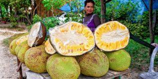 Ce este jackfruit, fructul exotic cu gust de carne, imens si extrem de sanatos: acesta poate preveni aparitia cancerului
