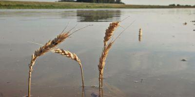 Fermierii din Romania primesc bani europeni pentru combaterea problemelor climatice