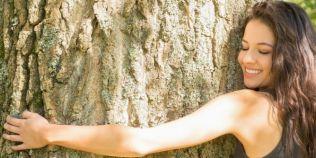 Cum ne vindecam cu terapia prin copaci si ce trebuie sa evitam. Copacii vampir si rolul lor in dendroterapie