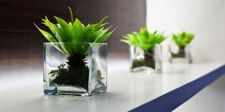 7 plante care atrag energia pozitiva. Unele sunt indicate in dormitor, pentru